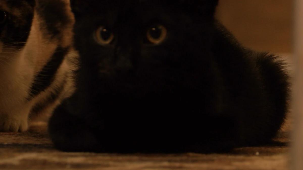 Uno de los gatos negros de la Casa de los Gatos de Belinda.